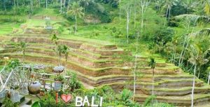 Ubud and Kintamani Bali Full Day Tou