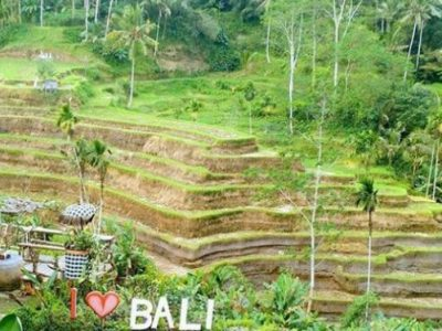 Ubud and Kintamani Bali Full Day Tou